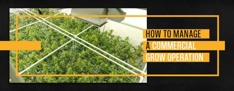 How to Manage a Commercial Grow Operation