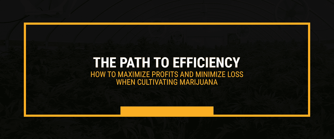The Path to Efficiency — How to Maximize Profits and Minimize Loss When Cultivating Marijuana